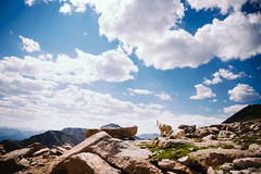 Mountains & Mountain Goats (Bernardo Mancebo) Tags: trees sky mountain lake mountains canon woods colorado echo goat goats 5d mountevans lightroom markiii vsco