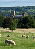 Wells Cathedral (Mukumbura) Tags: uk trees england history church field grass animals town oak worship sheep cathedral farm religion farming wells somerset wellscathedral land lambs agriculture livestock grazing gettyimages copperbeech welcomeuk