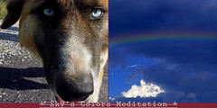 Mditation aux yeux bleus (andrefromont/fernandomort) Tags: dog chien diptych meditation diptyque mditation thelittledoglaughed fernandomort andrfromont andrefromontfernandomort