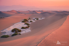 Mesquite Sand Dunes, Death Valley National Park (www.fourcorners.photography) Tags: california dunes pink boehringer lightpalette usa west sand sunrise dust desert dry deathvalley nationalpark stovepipe fourcornersphotography