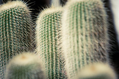 IMG_6857 (Val_tho) Tags: cactus plant canon eos thomas canoneos cactes vegetal plantes jardinbotanique valadon canonef70200mmf28lusm cacte valtho canon70200f28l 2013 70200mmf28 400d eos400d canon70200mm28lusm moskitom