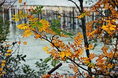 """""""A loud voice cannot compete with a clear voice, even if it's a whisper."""" (stjernesol) Tags: autumn trees orange yellow seaside colours dof bokeh colourful depth autumnal seaview beenfreezingherethelast24h temperaturesdroppeddownto4degreesc thatisreallycold andnotmorethan12cinthedaytime iamsureihavenovikingbloodinmyveins idoloveautumncolours beforetherainandcoldturnseverythingbrownandfinallygreyandcolourless iamnotmadeforthisp"""
