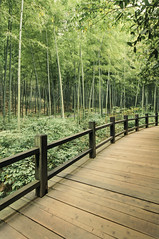 Deep Into The Bamboo Forest (Picocoon) Tags: china wood trestle forest landscape path bamboo liyang