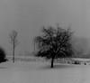 winter in holland (3) (bertknot) Tags: winter winterinholland
