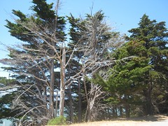 """Angel Island • <a style=""""font-size:0.8em;"""" href=""""http://www.flickr.com/photos/109120354@N07/11042920534/"""" target=""""_blank"""">View on Flickr</a>"""