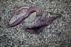 dead bloom (rpiker101) Tags: newzealand flower dead auckland greenhouse botanicalgardens domian rexture