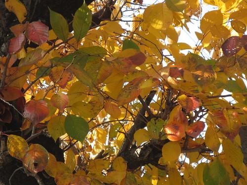 明るくなった葉