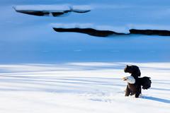 IMG_3664 (judd.furlong) Tags: iowacity canoneos eagles