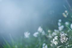 Waiting for Spring (marie_platz) Tags: flower tokyo spring shinjuku narcissus