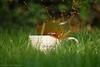 Spring time coffee splash (LouiseMelanie) Tags: uk green coffee grass spring mug splash coffeesplash