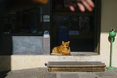 (justinwphotos) Tags: street travel justin light shadow italy dog 35mm photography fuji w fujifilm vicenza xe2