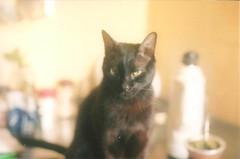 (Lolita Storm) Tags: light house black film cat photography photo day pentax k1000 domestic analogica analogic