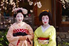 + (nobuflickr) Tags: japan kyoto maiko geiko          gionkoubu miyagawachou   20140402dsc03266