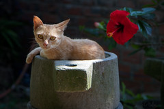 Chilling (Jchales.co.uk) Tags: world county travel light cats holiday hot travelling heritage beautiful cat town site travels asia place natural south pussy an unesco east vietnam chilling stunning pussycat hoi outstanding 2014 canonefs1755mmf28isusm