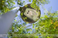 Entre hojas (Inma Tercero (Inma TG)) Tags: hojas 50mm rboles farolas contrapicado ramas cazadorasdeluz