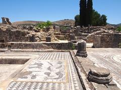 P5261337 (lnewman333) Tags: africa ancient northafrica mosaic historic worldheritagesite morocco fez maroc maghreb fes volubilis romanruins unescosite 1stcenturyad