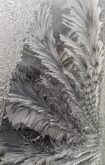 20140126-DSC_0065 (shmikov) Tags: frostwork