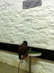Falconary Ireland009