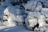 Rood Bridge Park, Hillsboro OR US (nikname) Tags: hillsborooregon snow snowday winter snowandsun shadows winterdays wintertrees trees snowytrees snowybranches roodbridgeparkhillsboroor hillsborooregonparks urbanparks roodbridgepark