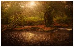 Turning Circles (David Haughton) Tags: woods woodland flood spiral eddy pool spin rotating trees oak fineart intimate landscape davidhaughton