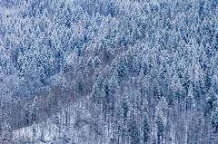 IMGP5722 (laurec.) Tags: luge neige oppenau