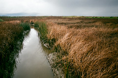 western squall (Super G) Tags: oly2017182 sanjose california film olympusom4 zuiko28mmf28 slough bay marsh grass reeds squall storm clouds horizon rain reflection