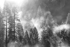 Winter Morning at Cook's Meadow (Priscila de Cássia) Tags: winter yosemite yosemiteconnect yosemitenationalpark trees fog landscape nikon nikonbrasil nikond700 blackandwhite bw misty nature naturephotography wild wilderness nationalpark sun sunlight morning cooksmeadow meadow prisciladecassia