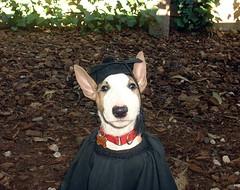 "Tony Pecks dog Carlitos • <a style=""font-size:0.8em;"" href=""http://www.flickr.com/photos/95808399@N03/8984269942/"" target=""_blank"">View on Flickr</a>"