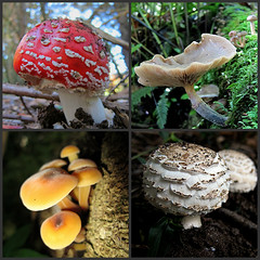 Fascinating Fungi (Mary Faith.) Tags: macro nature collage fungi muchrooms mygearandme ipiccy