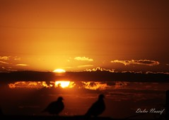 DULNAS - PÔR DO SOL - SUNSET (Dulce Nassif) Tags: sunset sky sun sol birds clouds flickr pássaro céu estrellas nuvens 1001nights crepúsculo quarzoespecial 1001nightsmagiccity magicmomentsinyourlifelevel3 magicmomentsinyourlifelevel4