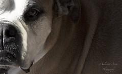 Someone's Best Friend (Malusita) Tags: dog pet canada calgary amigo friend perro bestfriend mascota yyc mejoramigo