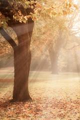 Es ist Herbst, Leute! (O.I.S.) Tags: park wood autumn trees light sun mist tree fall fog forest gold golden licht warm nebel laub herbst foliage rays sonne wald baum sonnenstrahlen backlighting gegenlicht strahlen bnde steinmeisterpark steinmeister