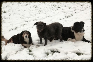 Betsy, Rambo, Livia