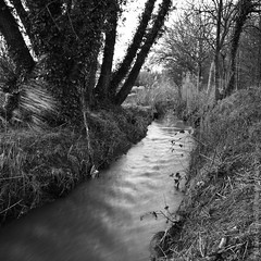 Three Hundred and Sixty Four (Mark Chance Photography) Tags: blackandwhite nature water lakes brook discovery pictureaday thatcham project365 threehundredandsixtyfour