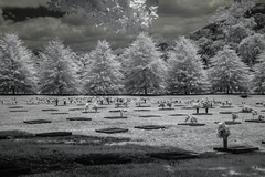 All is not lost. (erglis_m (Mick)) Tags: blackandwhite bw cemetery contrast canon ir blackwhite interesting canoneos20d infrared sureal coffsharbour infraredfilter lawncemetery