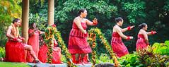 Polynesian dancers (julesnene) Tags: red rain island hawaii dancers oahu raining pcc polynesianculturalcenter dancingintherain canonefs1755mmf28isusm polynesiandancers culturaldancers canonefs1755mmf28isusmlens canoneos7d julesnene juliasumangil dancingwhileraining