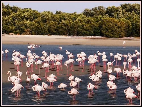 Thumbnail from Ras al Khor Wildlife Sanctuary