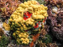 Coral Life (Lallee) Tags: ocean sea vacation orange water yellow coral underwater sealife snorkeling bahamas catisland