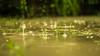 Rain (Syed Hamza Hassan) Tags: pakistan motion macro green water beauty rain weather cool best explore punjab hue rainfall pleasant multan sprinkle watersplash raindroplets drizzling syedhamzahassanphotography