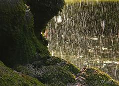 150720 rpgeN 150730  Ththi ( 6 pics ) (thethi: pls read the 1st comment) Tags: pluie goutte eau rocher mousse juillet livessurmeuse namur wallonie belgique setnamurcity faves44 bestof2015 albumjuillet ruby5