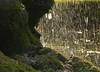150720 rpgeN 150730 © Théthi ( 6 pics ) (thethi: pls read the 1st comment :-)) Tags: pluie goutte eau rocher mousse juillet livessurmeuse namur wallonie belgique setnamurcity bestof2015 faves46 ruby10 setjuillet