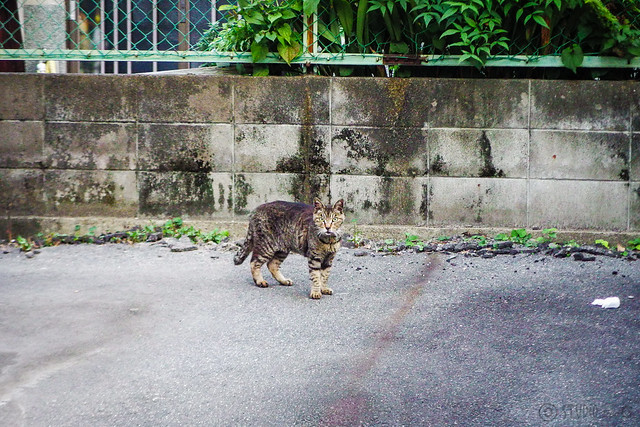 Today's Cat@2015-08-02