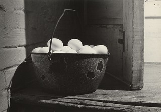 455 - Eggs Gathered - Caffenol Print