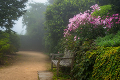 Blue Mountains Botanic Gardens (jenni 101) Tags: benchmonday bluemountainsbotanicgardens flowers hbm bench mist pink pretty