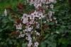Flor de almendro (martabartibas) Tags: flower almendro rosa pink nikon 30mm