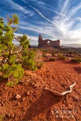 _DSC8103 (Rattleep) Tags: archesnationalpark desert flowersplants landscape nationalpark stephandphotography2016 sunset turretarch usa utah wueste