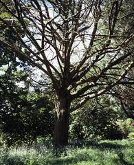 Fota Island Tree (nikolaijan) Tags: plaubelmakina 67 plaubel fuji astia100f fota island ireland 120 analogue irishanalogue analogtrees