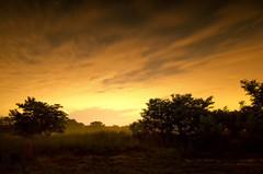 Astral 025 (acreativename) Tags: trees sky night sunrise stars virginia va kinggeorge d7000