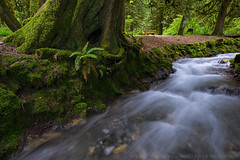 Bridal Falls Park in Spring (Wizard of Wonders) Tags: life park trees plants canada nature water beautiful vancouver river landscape leaf moss spring stream bc scenic may trails greenery flowing veins shallow ferns banks picnictable rushingwater bridalfalls largeleaves mosscovered