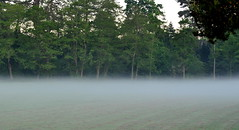 Morning Mist (Dave McGlinchey) Tags: morning mist atmospheric vapour optic dewpoint